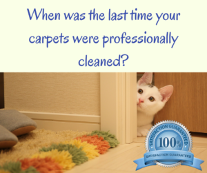 alderley carpet cleaning northside brisbane
