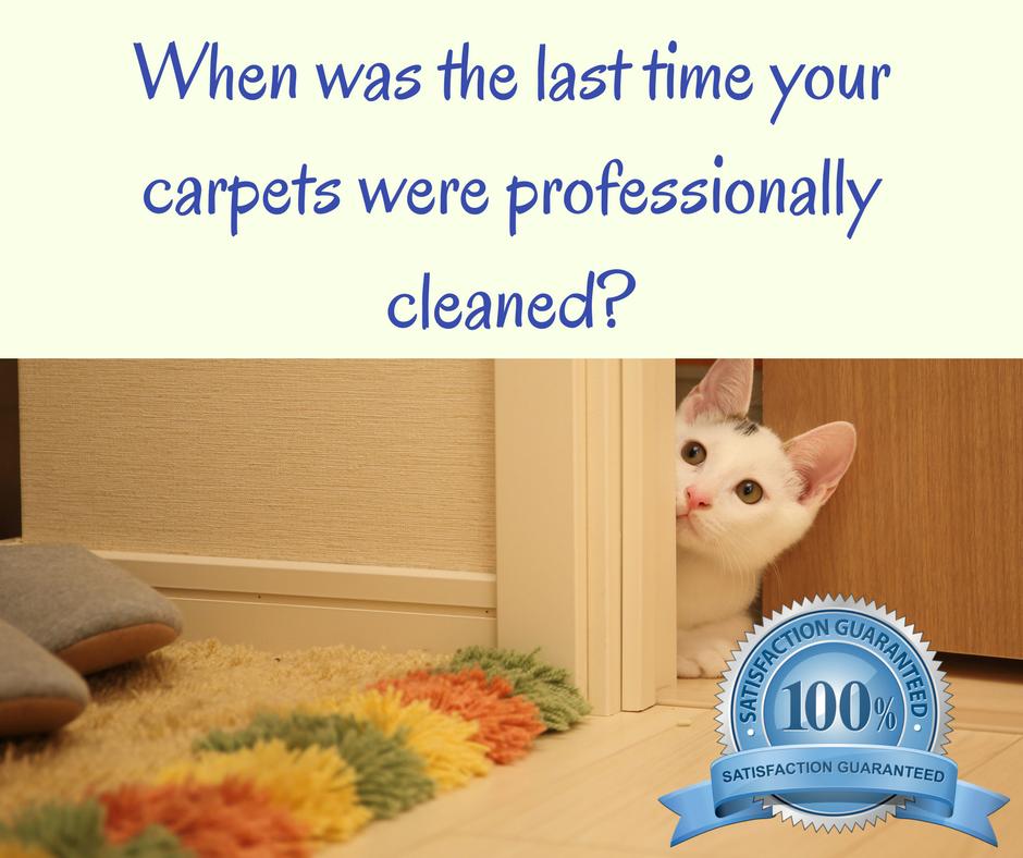keperra carpet cleaning northside brisbane