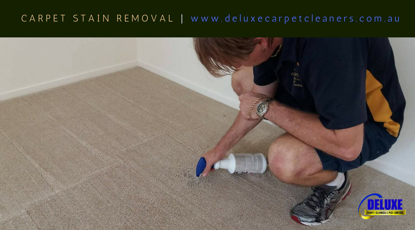 carpet stain removal carseldine carpet cleaning