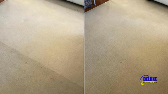 dayboro carpet cleaning