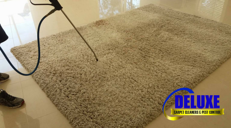 deluxecarpetcleaners - removing carpet odours
