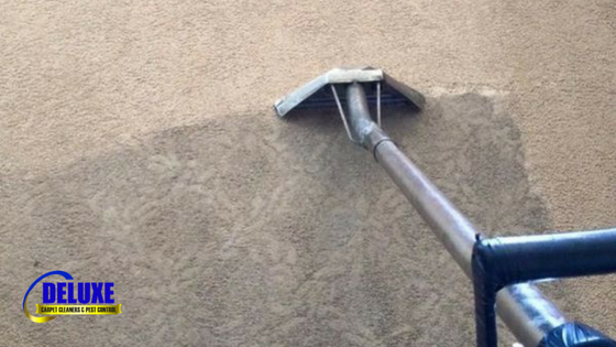 Why Do I Need A Professional Carpet Cleaner?