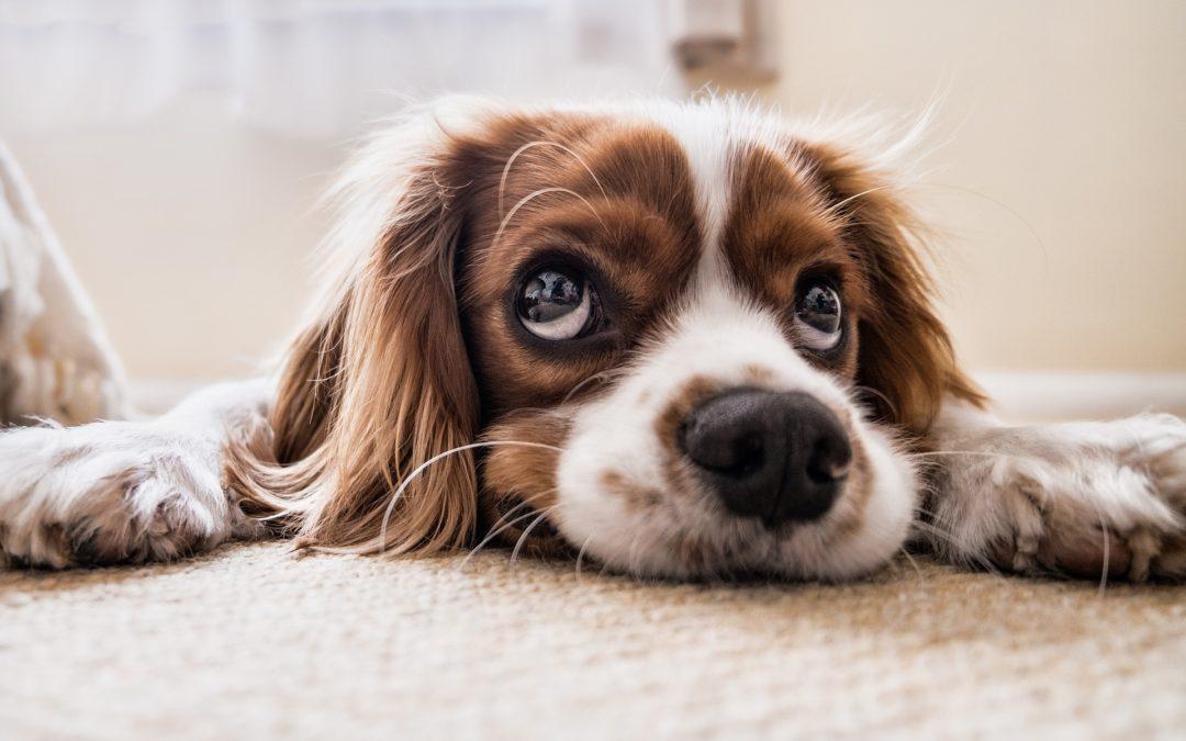 Carpet Fibres – What Should I Choose For My Home?