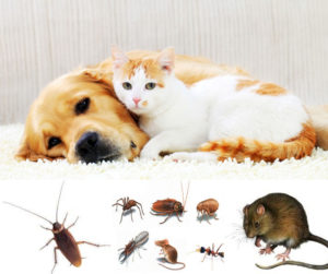 local pest controller in north brisbane